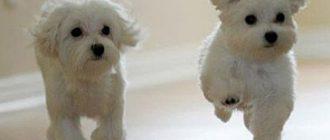 собаки с хорошим настроением